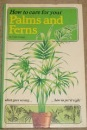 How to Care for Your Palms and Ferns (How to Care for Your Houseplants)