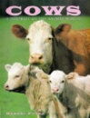Cows (A Portrait of the Animal World)