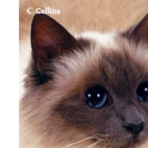Caring For Your Cat: In association with Cats Protection: In Association with the Cats Protection League