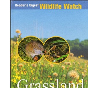 Grassland & Woodland in Summer (Wildlife Watch)