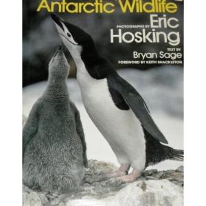 Antarctic Wild Life
