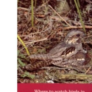 Where to Watch Birds in Kent, Surrey and Sussex