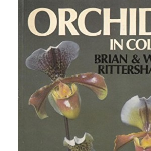 Orchids in Colour
