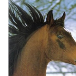 Understanding Your Horse: How to Overcome Common Behaviour Problems