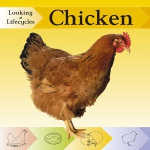 Chicken (Looking at lifecycles)