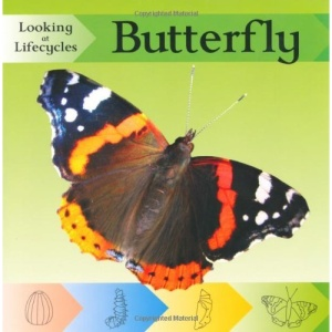 Butterfly (Looking at Lifecycles)