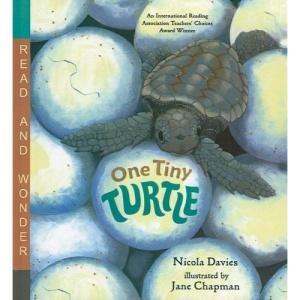 One Tiny Turtle (Read and Wonder (Pb))