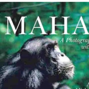 Mahale: A Photographic Encounter with Chimpanzees