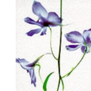 The Moon and Flowers: Woman's Path to Enlightenment