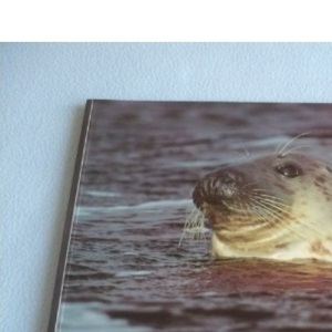 Seals (Worldlife Library)