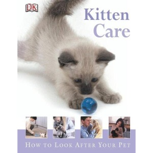 Kitten Care: How to Look After Your Pet