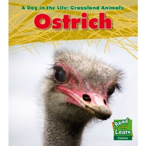 Ostrich (A Day in the Life: Grassland Animals)