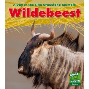 Wildebeest (A Day in the Life: Grassland Animals)