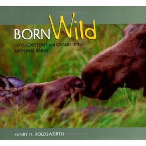 Born Wild in Y'Stone & Grand Teton