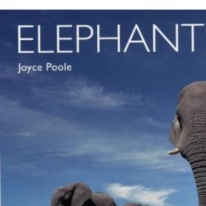 Elephants (Worldlife Library)