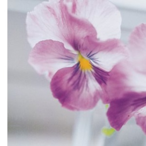 A Handful of Flowers: A Romantic Celebration of the Language of Flowers