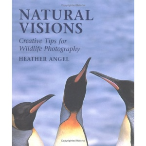 Natural Visions: Creative Tips for Wildlife Photography