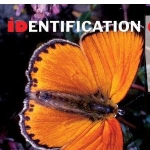 Butterflies (Identification Guides)