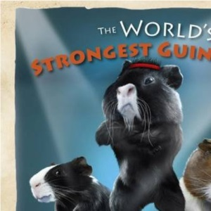 The World's Strongest Guinea Pig: Willie and Nillie Take on Gonzalo