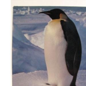 Antarctica: The Last Frontier