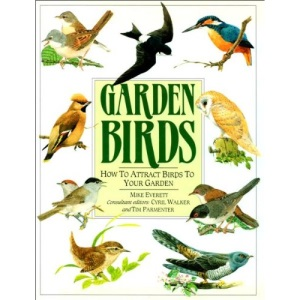 Garden Birds: How to attract birds to your garden