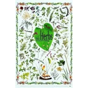 Herbs for Healing in New Zealand