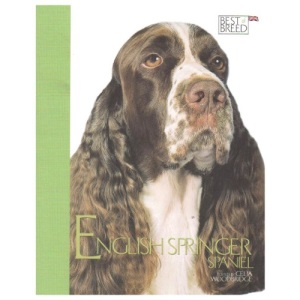 English Springer Spaniel (Best of Breed)