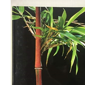Bamboos (Evergreen Series)