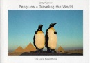 Penguins - traveling the world